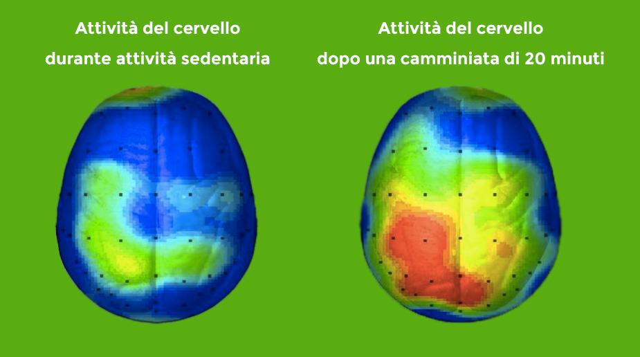 attività-cervello