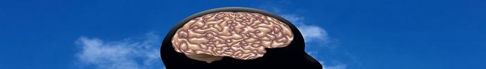Come Allenare il Cervello: 3 Modi per Allenare il Cervello (Anche Dopo i 25 Anni)
