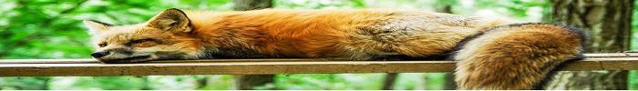 Come Dormire Bene: 5 Modi Utili per Dormire Meglio